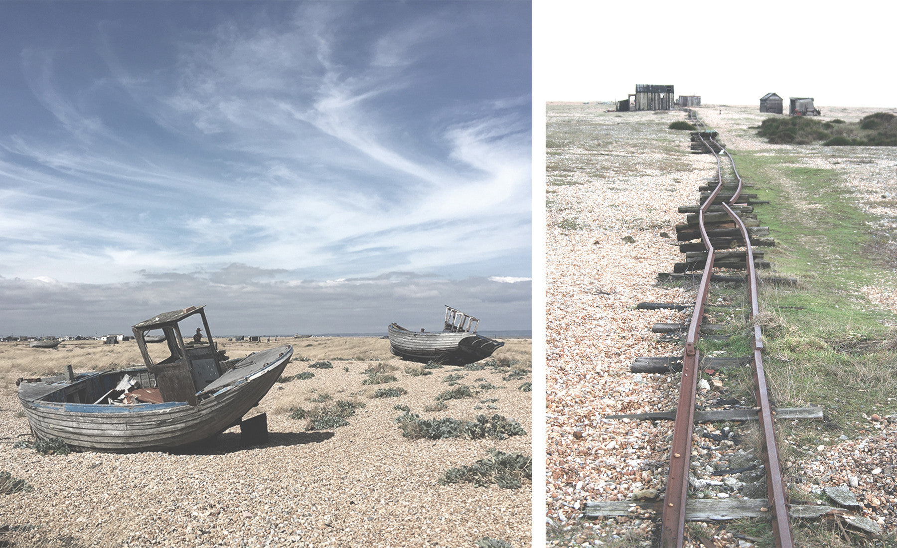 dungeness-comp