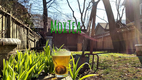 Spring is here! Enjoy MoxTea 100% Natural Energy Boost in all seasons!