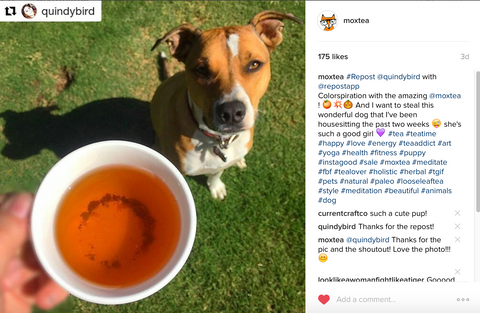 MoxTea is loved by both humans AND pets!