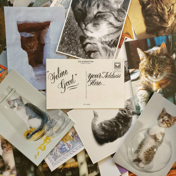 Cats & Calligraphy - Postcards