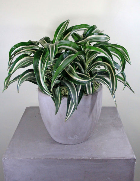 Green Plant in a Light Gray Cement Container
