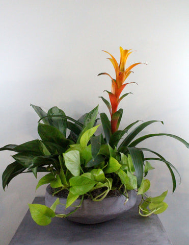 Indoor Garden Bowl with a Bromeliad