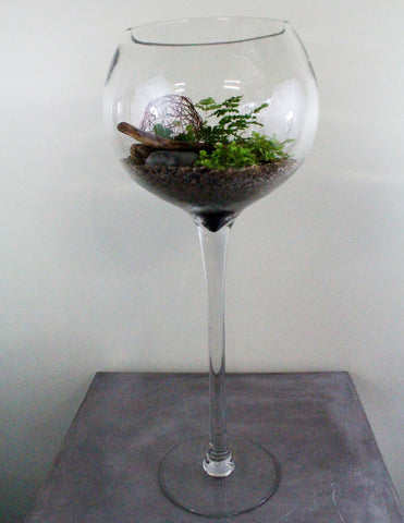 Green Plant Terrarium in a Glass Wine Goblet