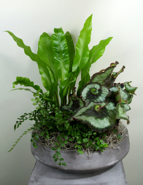 Indoor Garden Bowl in a Cement Container