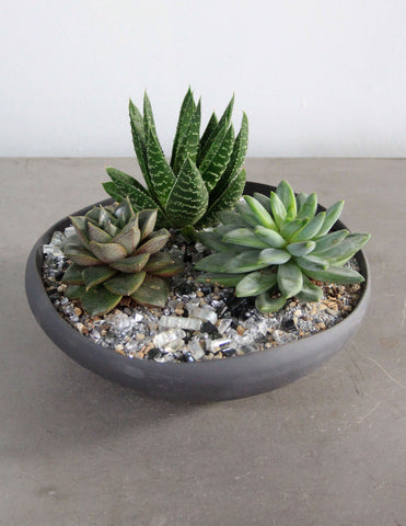 Succulent & Cacti Garden in a Gray Bowl