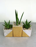 Succulent Gift Plant Set in Paradox Pots
