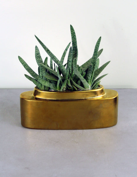 Haworthia Succulent in Gold Planter