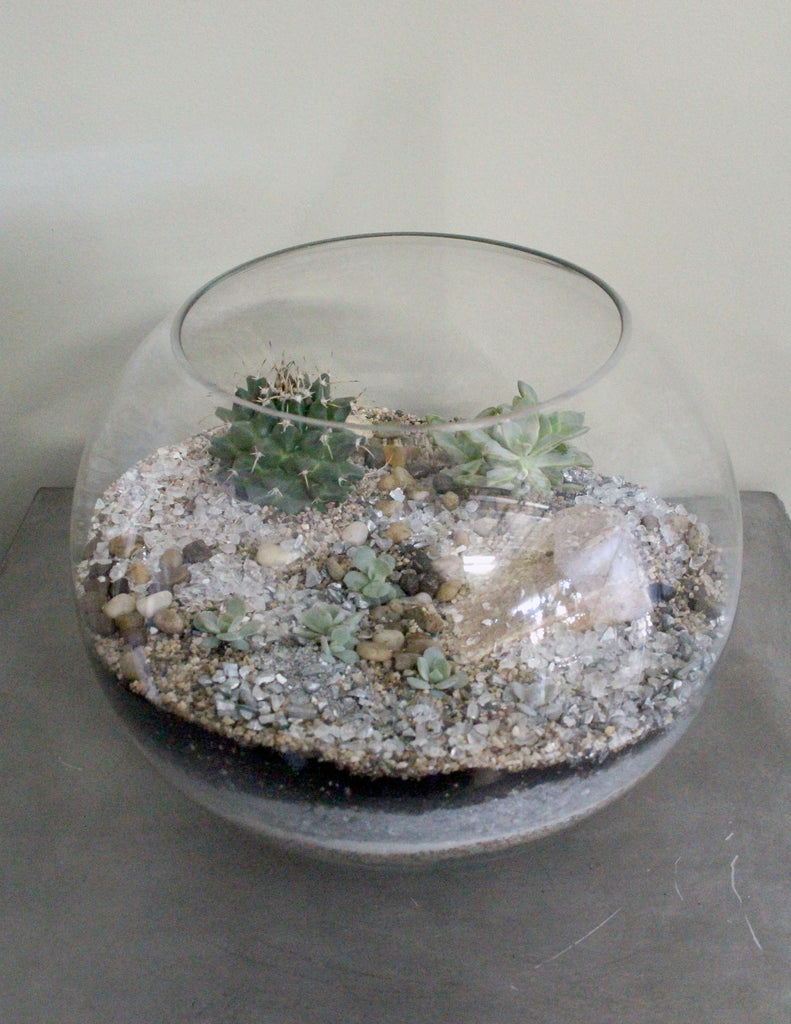 Cacti Succulent Terrarium Garden Large Bowl The Plant People