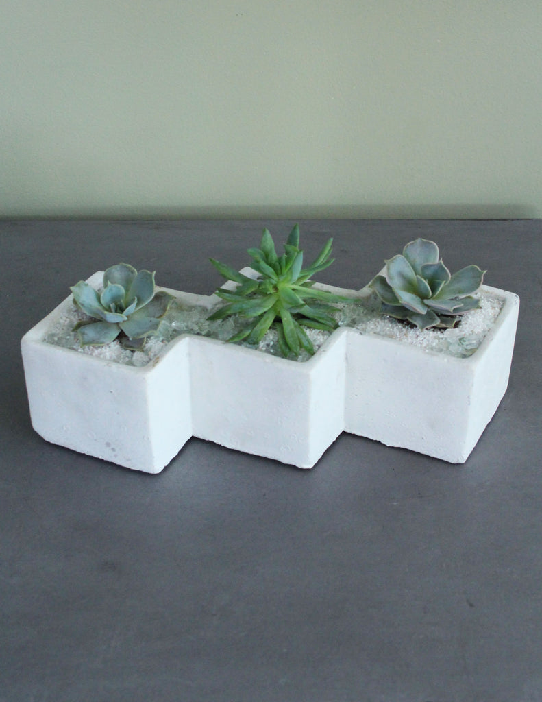 Succulents in ZigZag Container