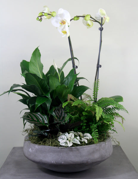 Indoor Garden Bowl with Orchid