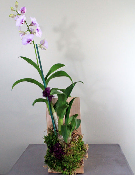 Orchid on a Cedar Board