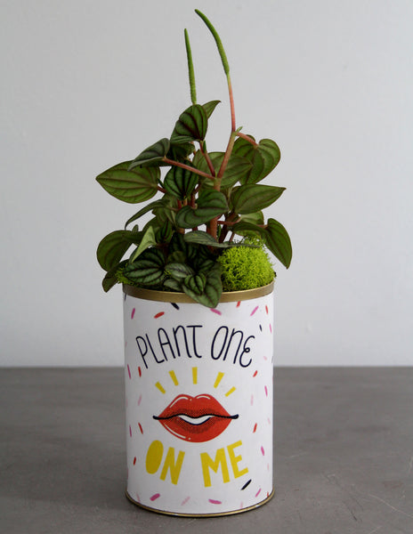 Plant One On Me Can with a Green Plant