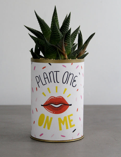Plant One On Me Can with a Succulent