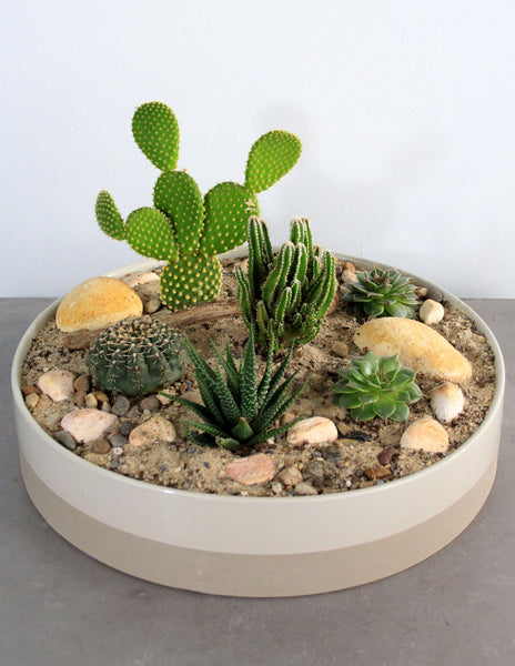 Succulent & Cacti Garden in a Cream and Taupe Bowl