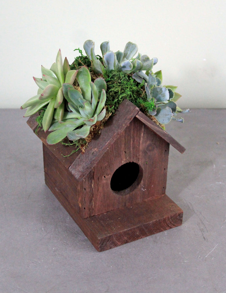 Succulents on a Birdhouse