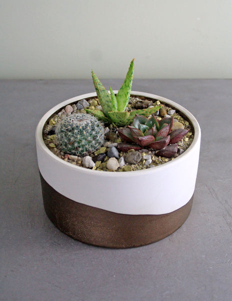 Succulent & Cacti Garden in a White and Copper Bowl