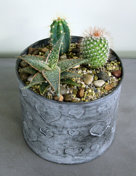 Succulent & Cacti Garden in a Metal Tin with Hearts