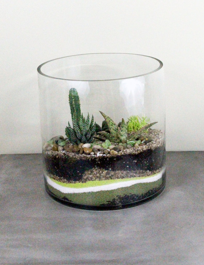Cacti Succulent Terrarium Garden Short The Plant People