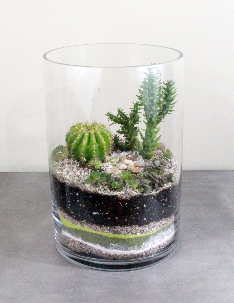 Cacti Succulent Terrarium Garden Medium The Plant People