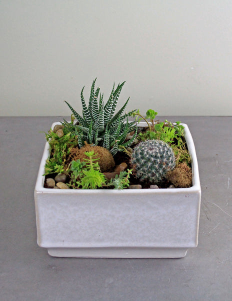 Succulent and Cacti Garden in a Creamy White Container