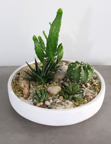 Succulent & Cacti Garden in a White Bowl