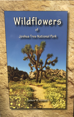 Wildflowers of Joshua Tree National Park