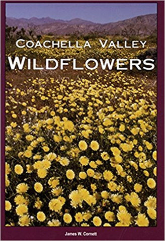 Coachella Valley Wildflowers
