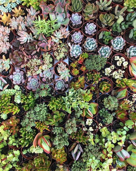 SUCCULENT PLANT CARE GUIDE