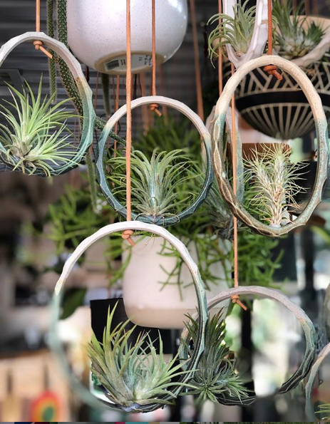 AIRPLANTS PLANT CARE GUIDE