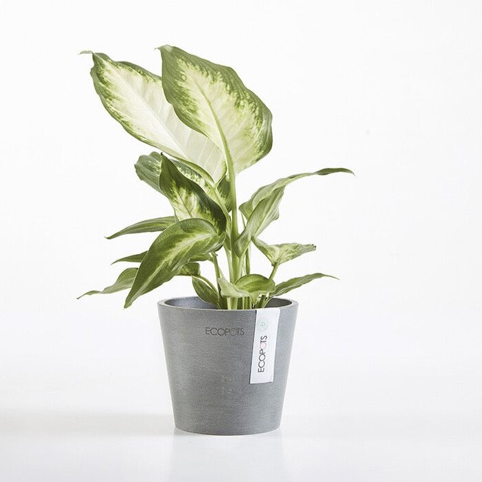 Amsterdam Mini 10 Eco Living Pot
