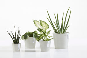Amsterdam Mini 8 Eco Living Pot