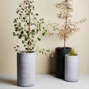 Sammy Planter - Coal