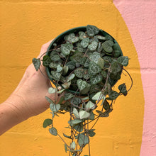 Load image into Gallery viewer, Chain Of Hearts - 13cm Pot