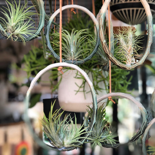 Alhoka Airplant Ring