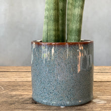 Load image into Gallery viewer, Sanseveria Cylindrica & Ceramic Pot - Medium