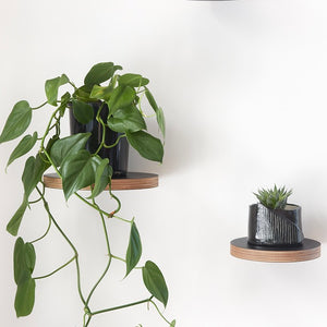 DIY Floating Plant Shelf