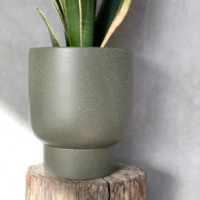 Load image into Gallery viewer, Finch Pot - Medium - Cypress