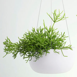 Raw Earth Hanging Planter