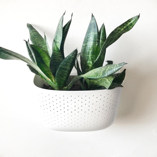 White Living Wall Planter