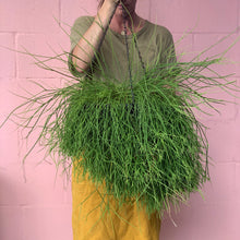 Load image into Gallery viewer, Assorted Giant Rhipsalis - 305mm Baskets