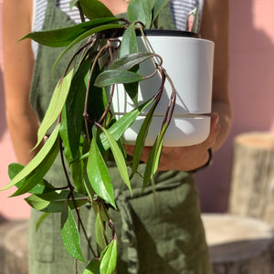 17cm Self Watering Pot