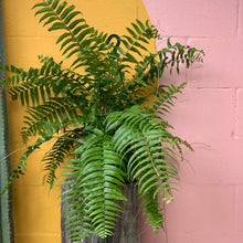 Load image into Gallery viewer, Macho Fern - 20cm Basket
