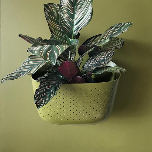 Olive Living Wall Planter