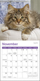 "Cats Mini Wall Calendar 2021, 7"" x 7"""