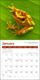 "Frogs Mini Wall Calendar 2021, 7"" x 7"""