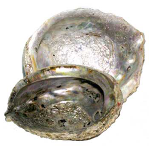 "Abalone Shell incense burner 5""- 6"" - Wiccan Place"