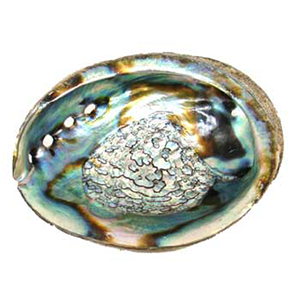 "Abalone Shell burner 4""-5"" - Wiccan Place"