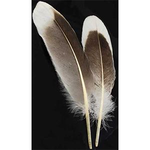 Natural Gray Goose feather - Wiccan Place