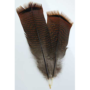 Bronze Pre-tail Turkey feather - Wiccan Place