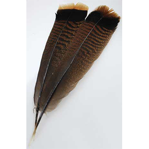Bronze Turkey Tail feather - Wiccan Place